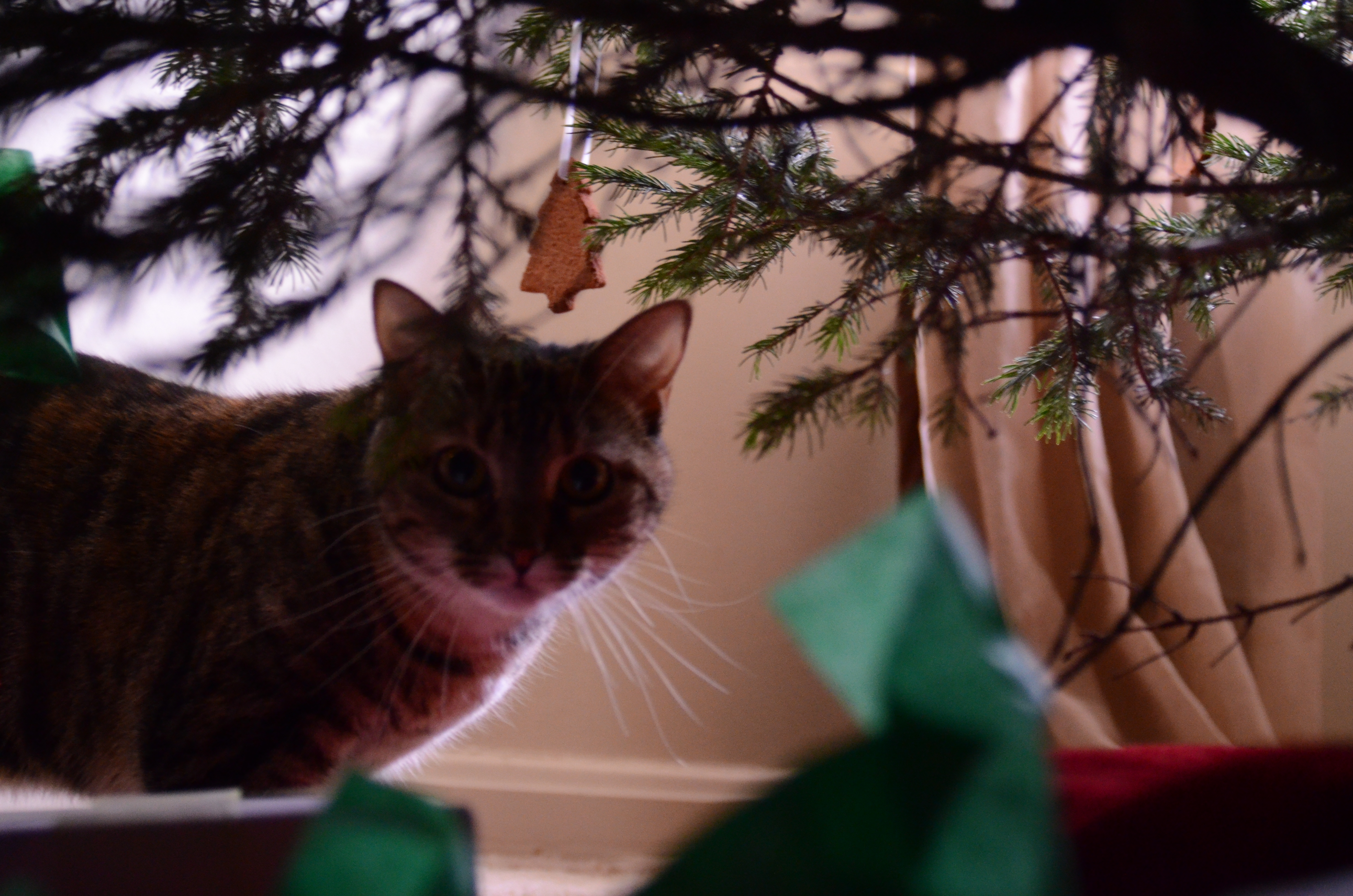 mouse isn't sure about the tree